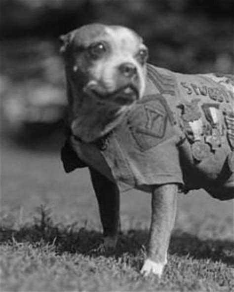 Sergeant Stubby Information Sergeant Stubby Person Pictures And Information Fold3