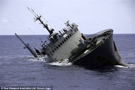 british couples yacht sunk by whale in caribbean telegraph sea shepherd accuses poacher ship captain of scuttling