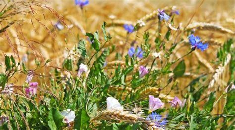 Wilde Pilze Im Garten by Die Besten 25 Essbare Wilde Pilze Ideen Auf