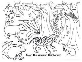 rainforest animals coloring pages rainforest animals coloring page print