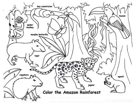 amazon rainforest animals coloring page hs country