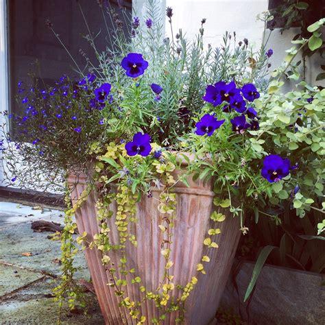 garden pots   tips  brilliant