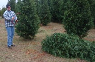 choosing a christmas tree farm