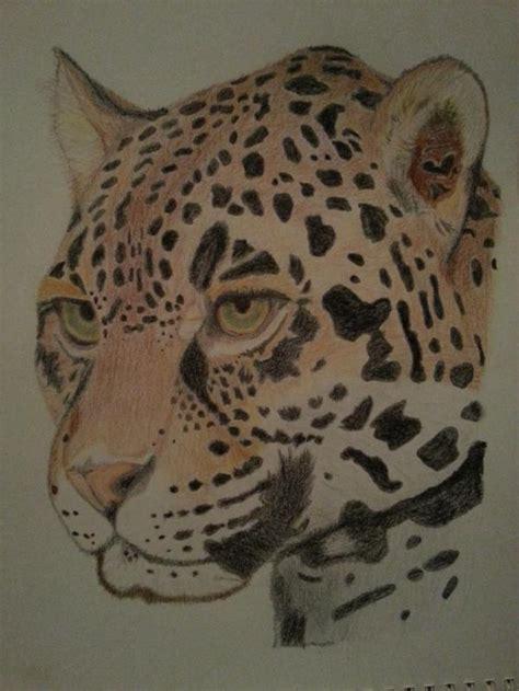 imagenes de jaguares para dibujar jaguar dibujado con lapiz imagui