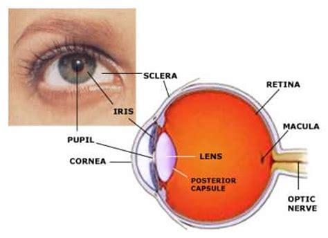 diagram mata the human eye parts diseases accommodation