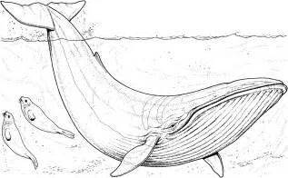 free whale coloring pages
