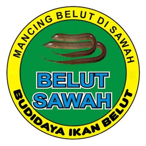Bibit Ikan Belut cultivation fish eels teknik budi daya belut