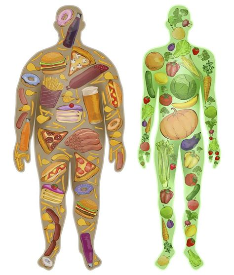 carbohydrates or fats understanding fats carbohydrates and their in a