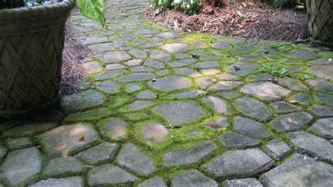 cement patio stones quikrete walk maker mold quikrete