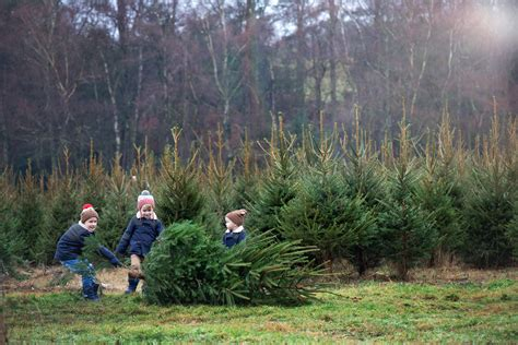 the christmas tree farm 2016 keep up with the jones family