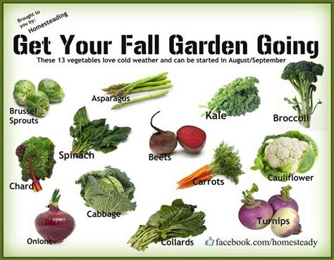 Planning And Planting A Fall Vegetable Garden Fall Garden Winter Vegetable Garden List