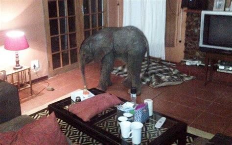 elephant living room decor 17 best ideas about living rooms on interior home decor and