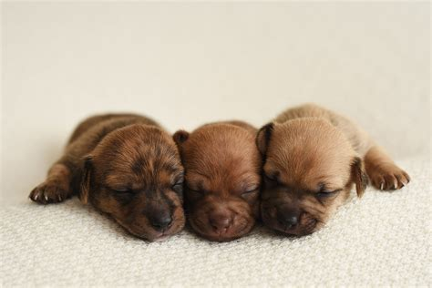 where to get puppies itty bitty shelter puppies get their own newborn photoshoot might be cuter than