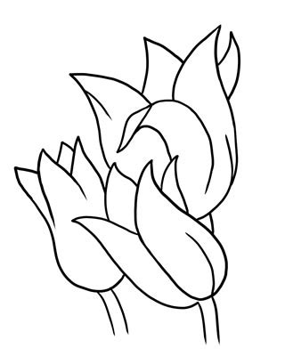 Outline Sketches Of Flowers by Flower Outline Drawing Clipart Best