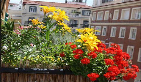 plantas para mucho sol