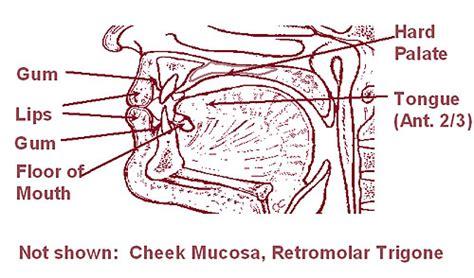 Retromolar Trigone Anatomy / dyrevelferd.info