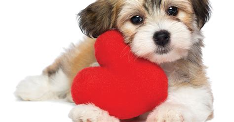puppy gram kitten puppy grams from the kentucky humane society leo weekly