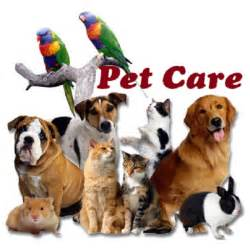 How To Get Your Dog To Be A Service Animal by Discount 0 Pet Care To Day Beauty Shop