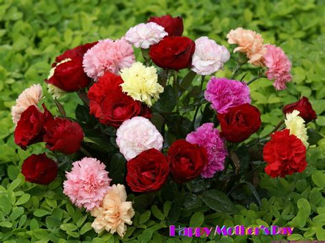 flowers for s day wallpaper free happy day flower and