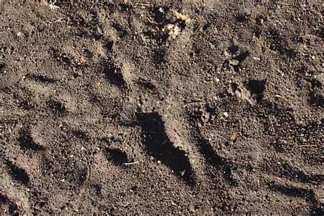 dirt texture picture  photograph  public domain