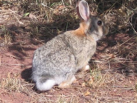 City Bunny Country Bunny by Morrison Colorado Real Estate Willow Springs Willow