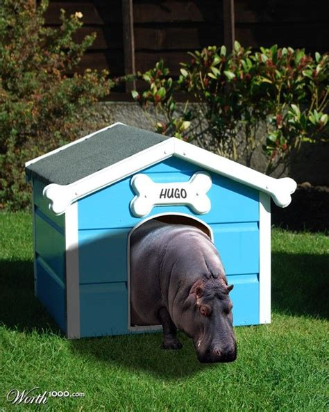 house hippo best 25 house hippo ideas on pinterest cutest baby animals funny baby grows and
