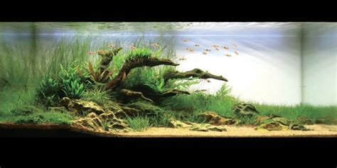 Aquascaping With Driftwood by Gorgeous Driftwood Aquascaping