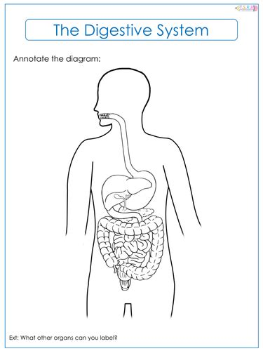 digestive system label worksheets by