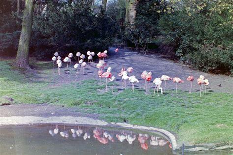 Zoologischer Garten Indisches Restaurant by Www Zoo Wuppertal Net Wuppertaler Zoo Historisch