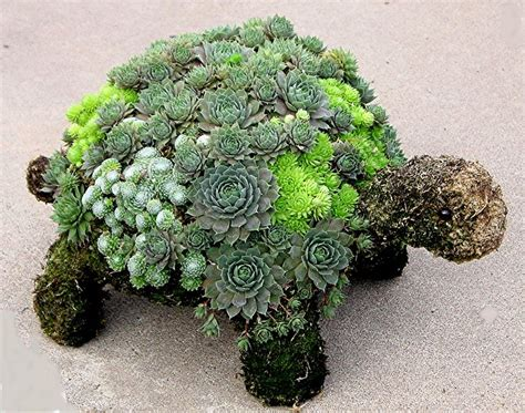 cute succulents love this for my garden succulent turtle topiary