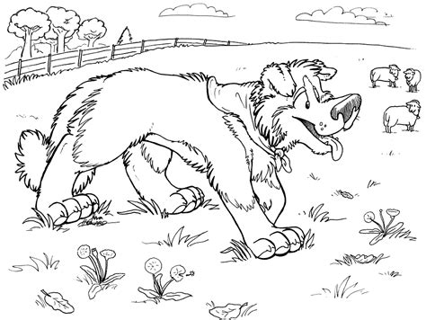 border collie coloring book pages coloring pages
