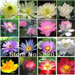 What Color Is A Lotus Flower Multi Color Lotus Water Flower Seeds Mixed Packing