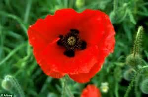 britain s longest serving rememberance day poppy seller