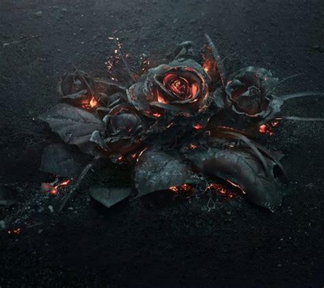 black rose themes black rose on tumblr
