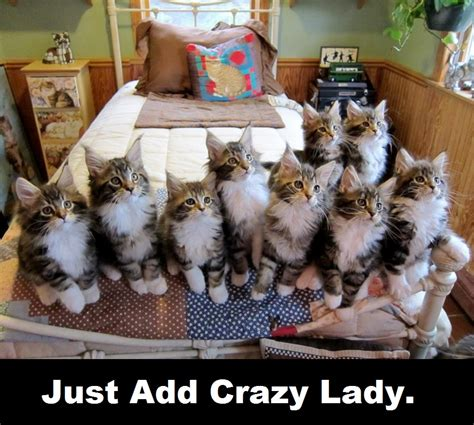 Crazy Cat Lady Memes - uncategorized thesofaortheroad s blog page 2