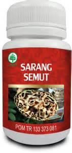 Sarang Semutteh Herbal Alami Papua cara alami mengobati lupus dengan sarang semut papua