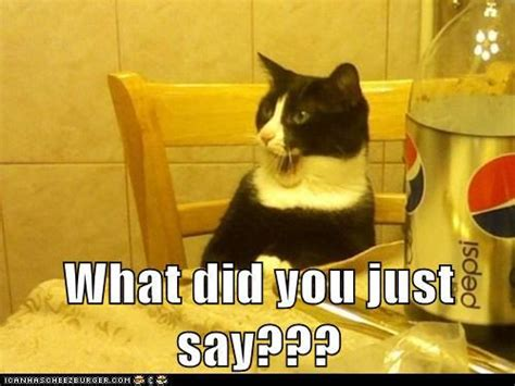 Funny What Memes - funny cats what did you just say jokes memes pictures