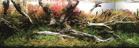 Ada The International Aquatic Plants Layout Contest 2015 aquascaping grifon international aquatic plants layout contest 2014