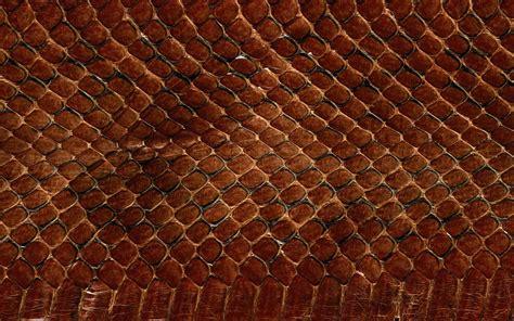 wallpapers snake skin wallpapers wallpaper snake skin animals scales textures desktop