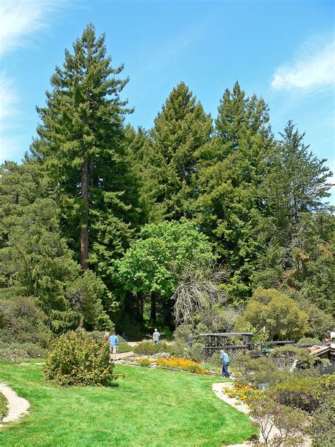 Garden Tree Regional Parks Botanic Garden