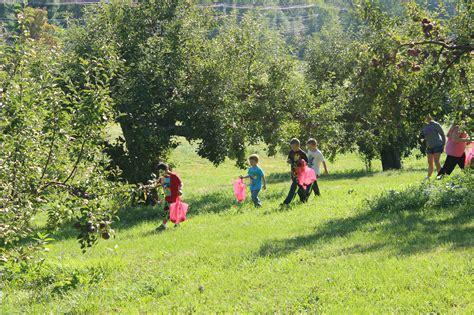 9 fruit norfolk ma 5 orchards for family friendly apple picking in massachusetts