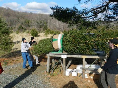 christmas tree farm sussex giordanos tree farm tree farm christmastreefarms net