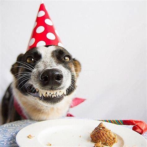 imagenes graciosas de cumpleaños con perros perrito se emociona por su pastel de cumplea 241 os sopitas com