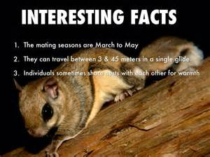best 28 facts about flying squirrels interesting