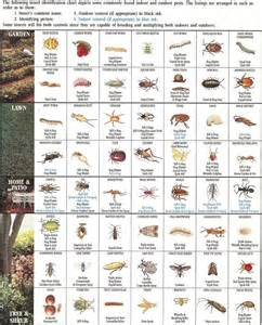 garden pest identification insect identification chart gardens charts and pictures