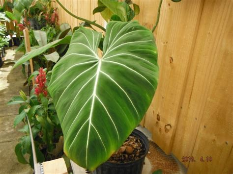new plants and this week s hours 5 29 6 1 2013 exotica
