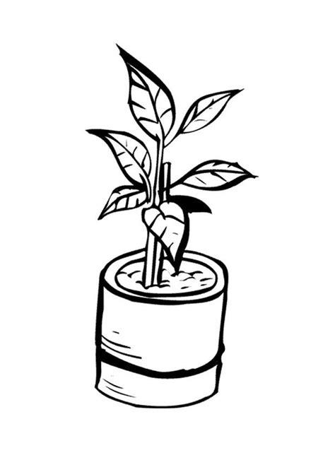 disegnare interni disegno da colorare pianta da interno cat 9647