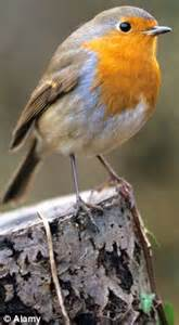 red alert for the robin after rainy summer sees worst