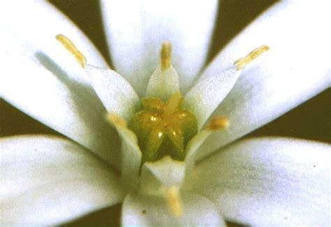 test fiori di bach test fiori di bach fiori di bach test tisane