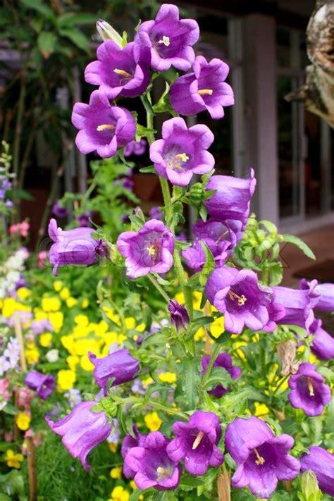 Thai Orchid Garden by Thai Orchid Garden At Northeast Of Thailand Stock Photo